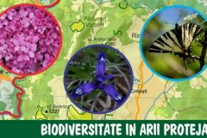 Biodiversitate in arii protejate