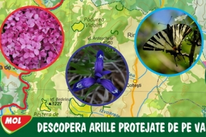 Descopera ariile protejate de pe Valea Ariesului